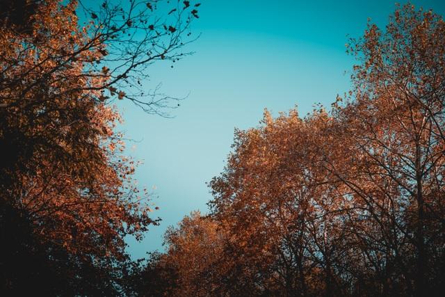 Choáng ngợp cảnh sắc đẹp như phim mùa cây thay lá ở Pháp - 10