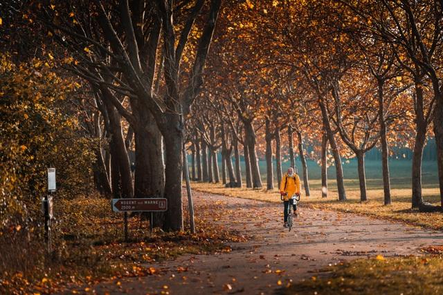 Choáng ngợp cảnh sắc đẹp như phim mùa cây thay lá ở Pháp - 12