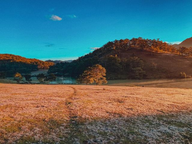 Đến Đà Lạt ngắm đồi cỏ hồng, khách vỡ mộng vì thực tế khác xa ảnh mạng - 6