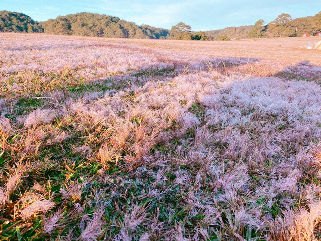 Đến Đà Lạt ngắm đồi cỏ hồng, khách vỡ mộng vì thực tế khác xa ảnh mạng - 7