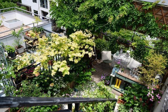 Vườn hoa sân thượng đẹp như thiên đường của vị giám đốc bận rộn - 4