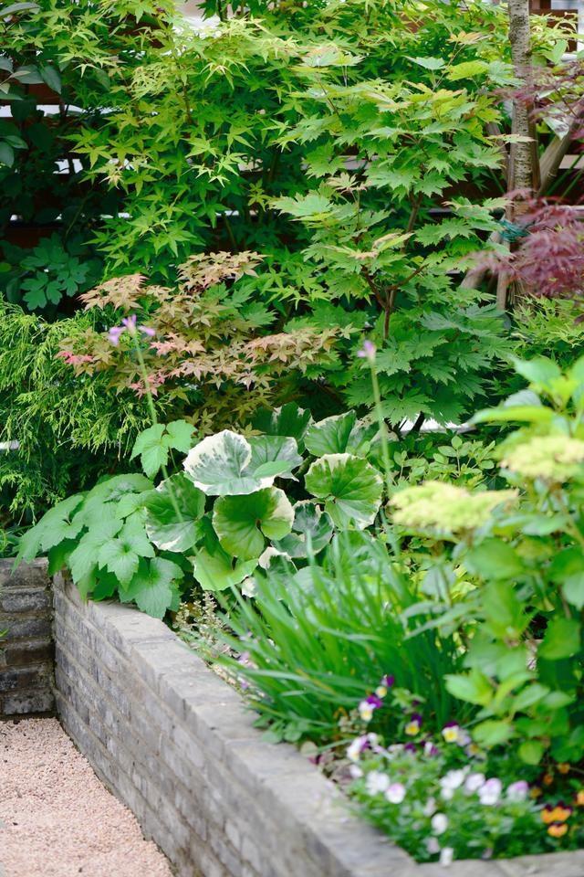 Vườn hoa sân thượng đẹp như thiên đường của vị giám đốc bận rộn - 9