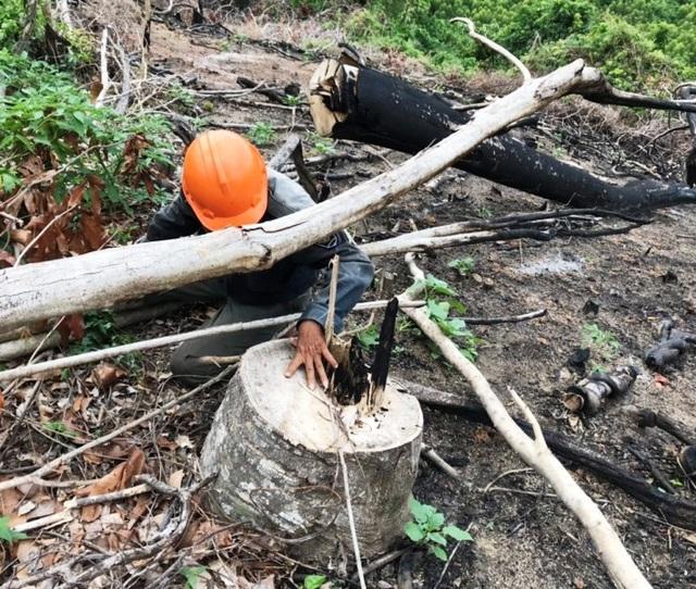 Bỏ phiếu kín, 100% đồng ý... không kỷ luật cán bộ để mất rừng (!?) - 1