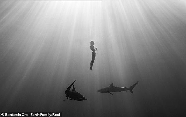Người mẫu liều mình khỏa thân bơi bên cá mập - 1