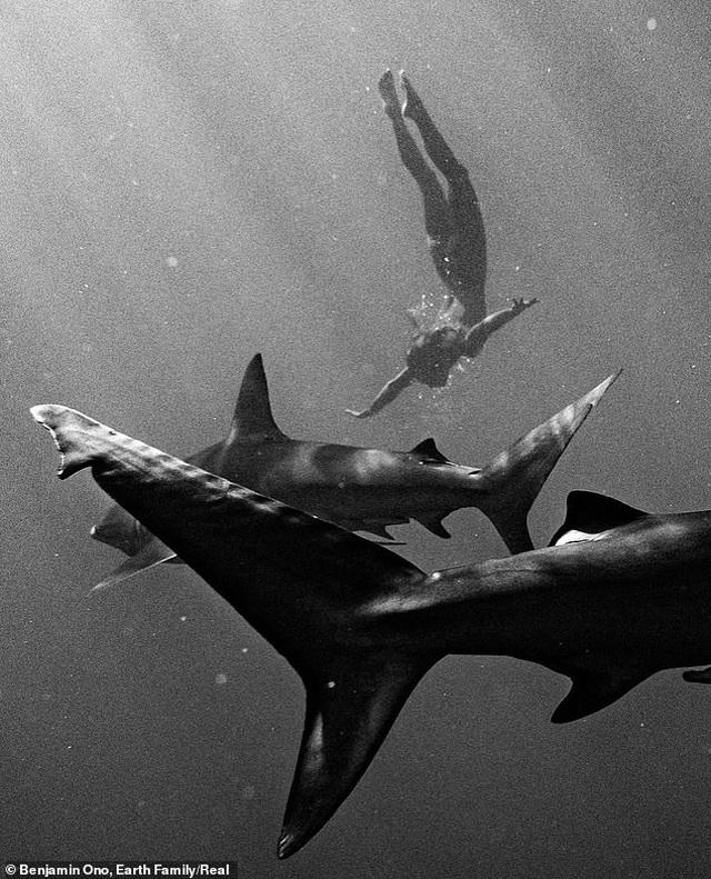 Người mẫu liều mình khỏa thân bơi bên cá mập - 3