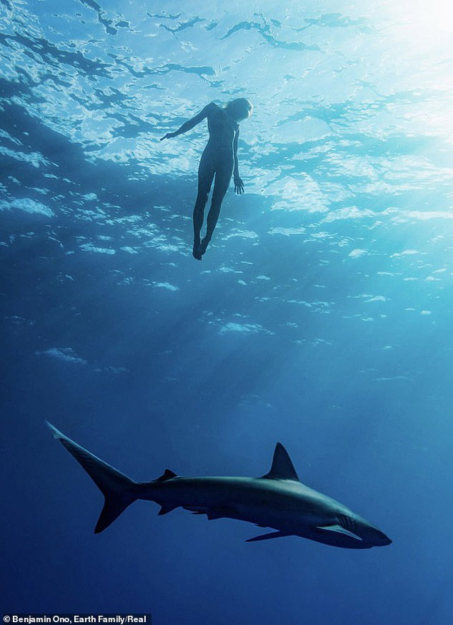 Người mẫu liều mình khỏa thân bơi bên cá mập - 4