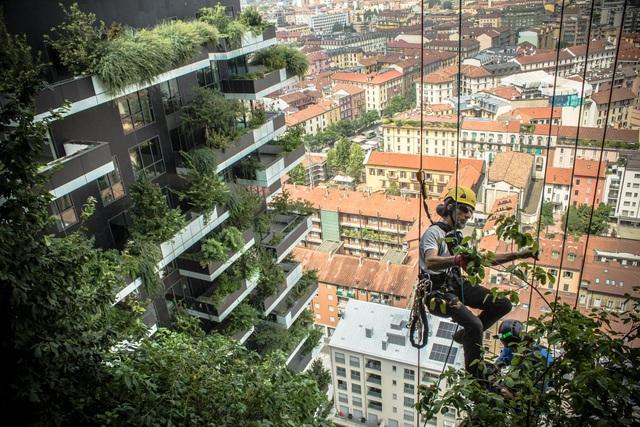 Độc đáo tòa chung cư như rừng giữa phố, mỗi buổi sáng chim hót líu lo - 1