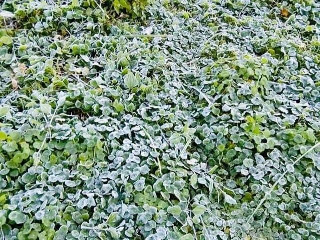 Băng giá phủ trắng mái nhà, cây cỏ ở vùng biên xứ Nghệ - 1