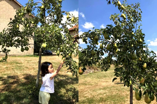 Trang trại trăm loại cây trái trĩu trịt quả của cặp vợ chồng Pháp - Việt - 6
