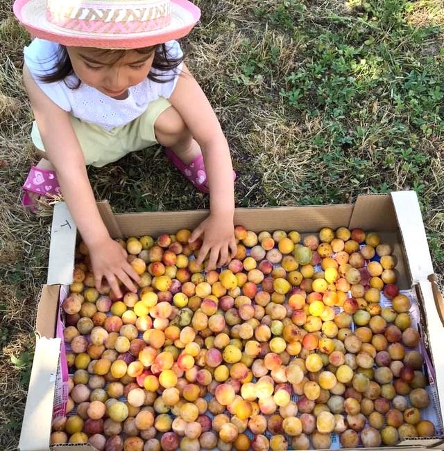 Trang trại trăm loại cây trái trĩu trịt quả của cặp vợ chồng Pháp - Việt - 9
