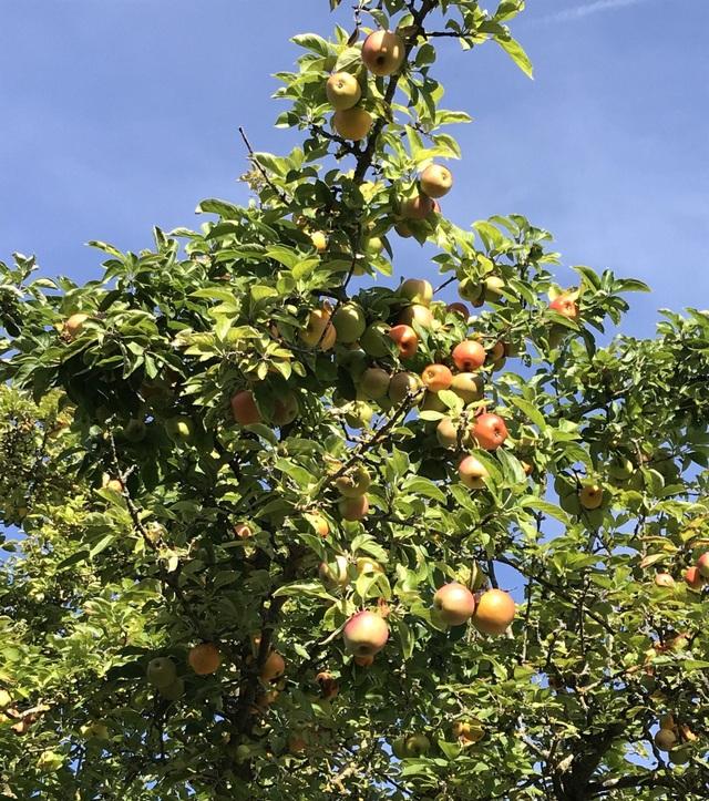 Trang trại trăm loại cây trái trĩu trịt quả của cặp vợ chồng Pháp - Việt - 13