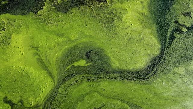 Phát hiện chấn động về hóa thạch động vật cổ nhất thế giới - 1