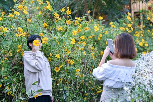 Thích thú check-in với hoa dã quỳ đẹp ngất ngây ngay giữa lòng Hà Nội - 2