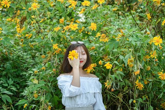 Thích thú check-in với hoa dã quỳ đẹp ngất ngây ngay giữa lòng Hà Nội - 3