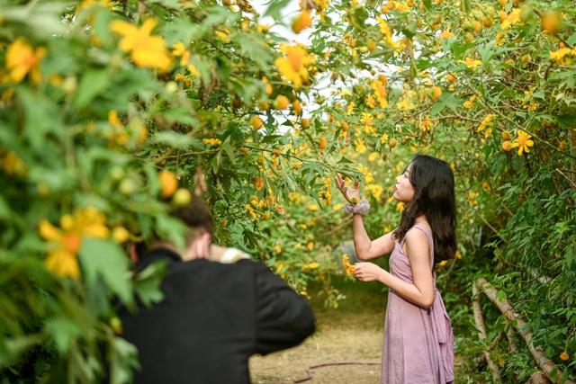 Thích thú check-in với hoa dã quỳ đẹp ngất ngây ngay giữa lòng Hà Nội - 10