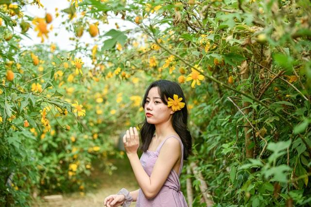 Thích thú check-in với hoa dã quỳ đẹp ngất ngây ngay giữa lòng Hà Nội - 7