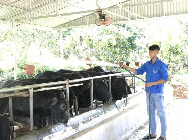 Thanh niên nông thôn kiếm trăm triệu đồng/năm: Không chọn ĐH, học chăn nuôi - 1