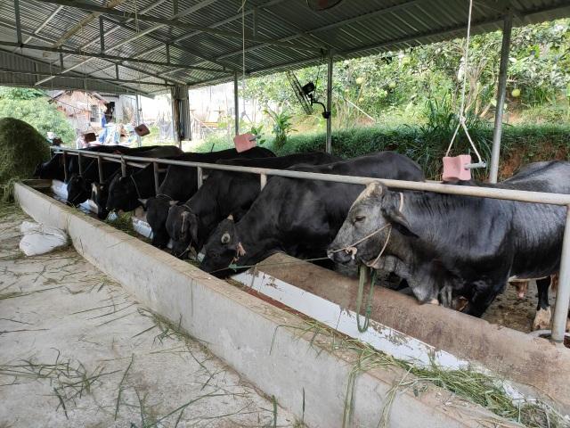 Thanh niên nông thôn kiếm trăm triệu đồng/năm: Không chọn ĐH, học chăn nuôi - 2