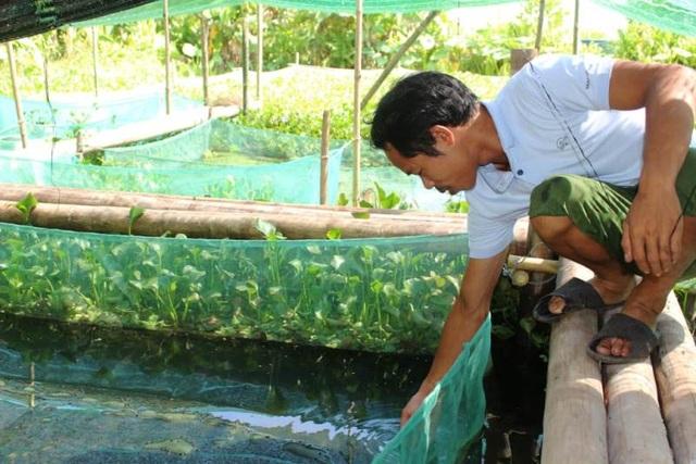 Đầu tư nuôi ốc nhồi, anh nông dân kiếm cả trăm triệu đồng mỗi năm - 2