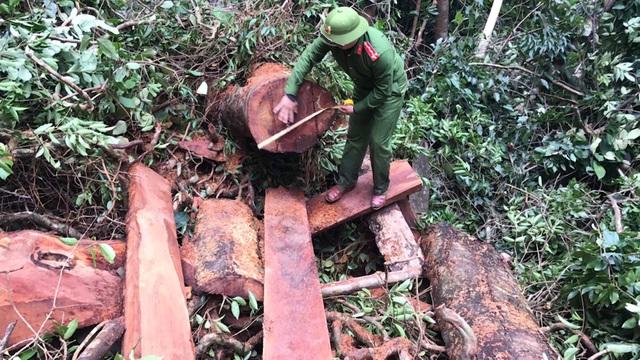 Tạm giữ hình sự 5 đối tượng liên quan đến vụ phá rừng  quy mô lớn - 3