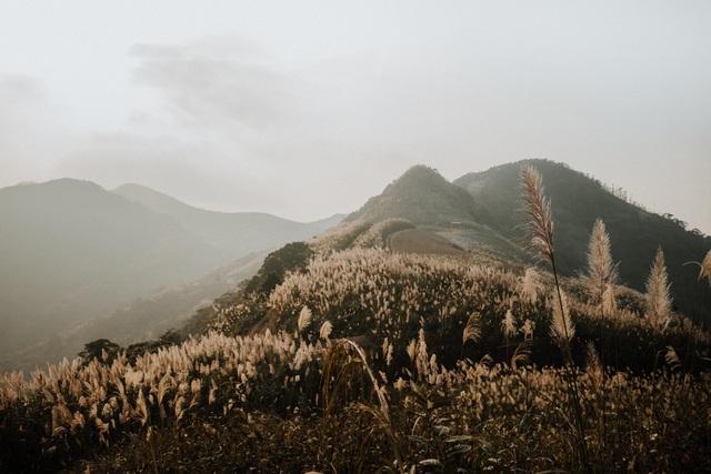 Lạc vào thiên đường cỏ lau đẹp như tranh ngay gần Hà Nội - 7