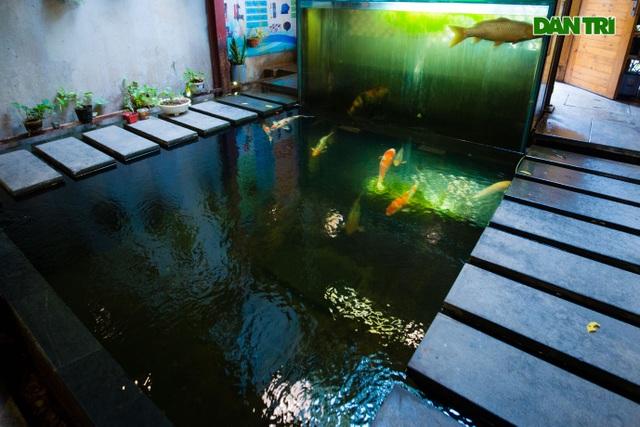 Uống cà phê ngắm cá Koi khủng độc đáo ở Hà Nội - 3