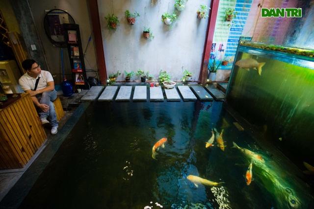 Uống cà phê ngắm cá Koi khủng độc đáo ở Hà Nội - 13