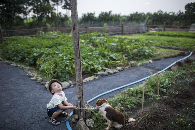 Nữ nhiếp ảnh Sài Gòn bỏ phố về quê, tự làm khu vườn 1ha thơ mộng - 6