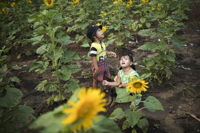 Nữ nhiếp ảnh Sài Gòn bỏ phố về quê, tự làm khu vườn 1ha thơ mộng - 4