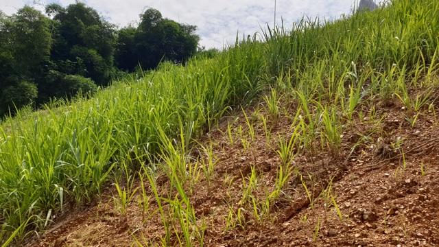 Biến phế phụ phẩm nông nghiệp thành vật liệu hữu cơ có giá trị cao - 3