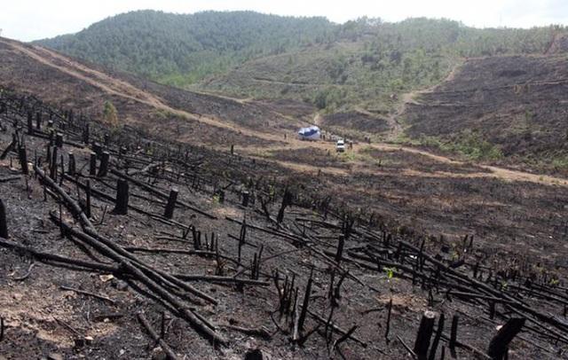Quảng Bình: Hàng chục hộ dân ngang nhiên lấn chiếm đất rừng để trồng keo - 1