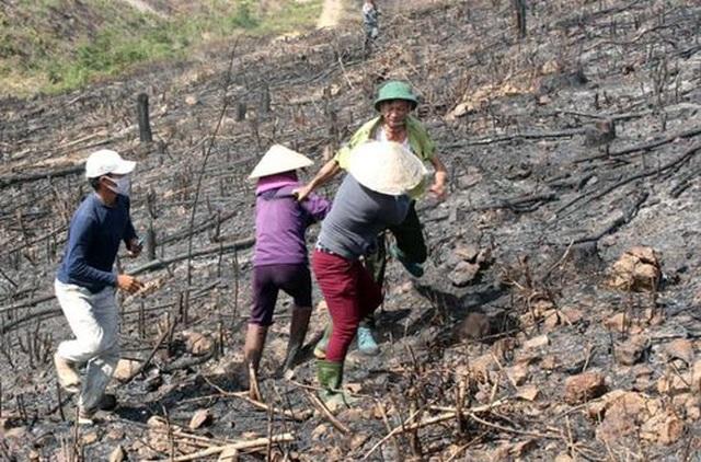 Quảng Bình: Hàng chục hộ dân ngang nhiên lấn chiếm đất rừng để trồng keo - 2