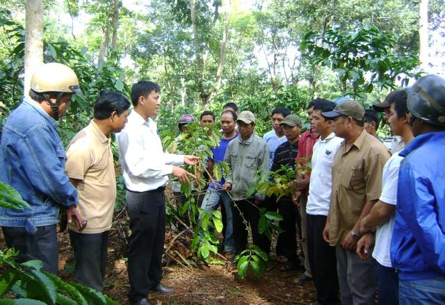 Nhiều thanh niên làm giàu sau khóa đào tạo nghề nông nghiệp - 2