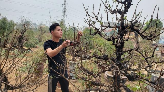 Người làm nghề trồng đào Nhật Tân lo cho vụ mùa dịp Tết Nguyên đán  - 3