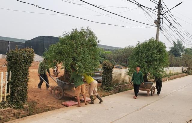 Người làm nghề trồng đào Nhật Tân lo cho vụ mùa dịp Tết Nguyên đán  - 8