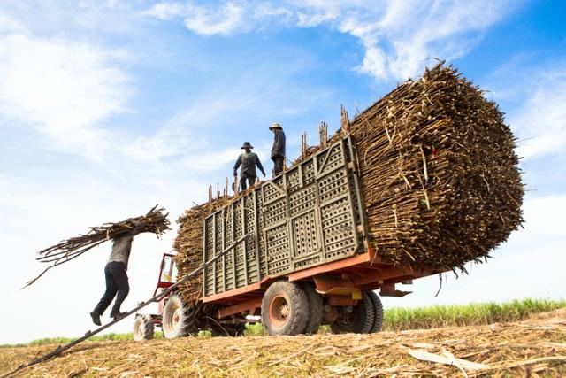 Thuế phòng vệ thương mại: Giải pháp cấp bách đảm bảo an ninh lương thực lâu dài cho quốc gia - 1
