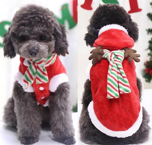 Chủ nhân đốt ví trưng diện đồ Noel hạng sang cho thú cưng - 1