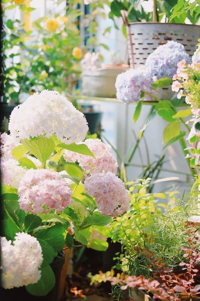Cô gái xinh đẹp lột xác cho ban công 7m2 thành vườn nhỏ rực rỡ sắc màu - 13