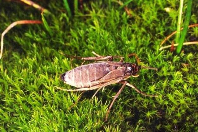 Những hòn đảo kỳ lạ có côn trùng không biết bay - 1