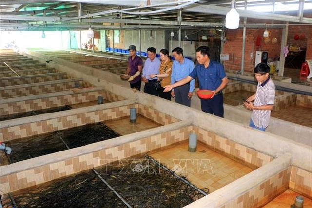 Bỏ chức Giám đốc, về quê nuôi lươn giống lãi tiền tỷ mỗi năm - 1