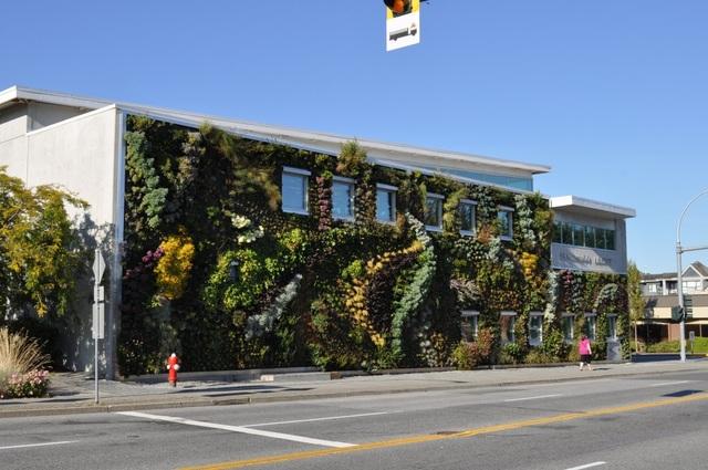 Độc đáo bức tường phủ hàng ngàn cây xanh, ai đi qua cũng ngoái nhìn - 1