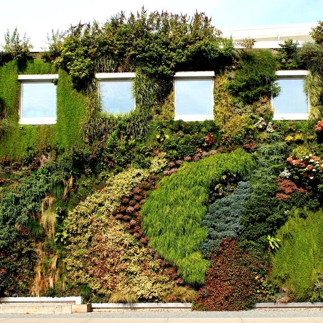 Độc đáo bức tường phủ hàng ngàn cây xanh, ai đi qua cũng ngoái nhìn - 2