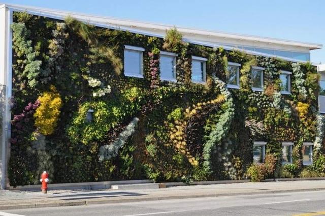 Độc đáo bức tường phủ hàng ngàn cây xanh, ai đi qua cũng ngoái nhìn - 3