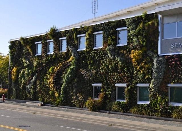 Độc đáo bức tường phủ hàng ngàn cây xanh, ai đi qua cũng ngoái nhìn - 6