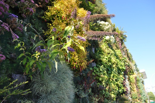 Độc đáo bức tường phủ hàng ngàn cây xanh, ai đi qua cũng ngoái nhìn - 7