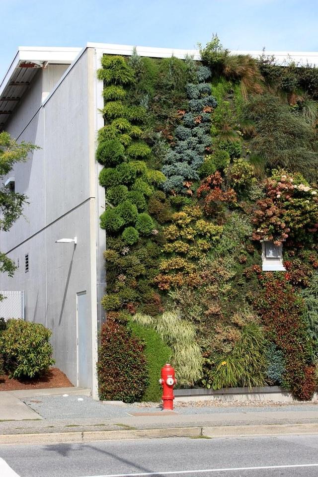 Độc đáo bức tường phủ hàng ngàn cây xanh, ai đi qua cũng ngoái nhìn - 8