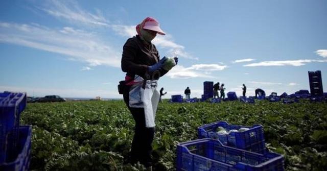Gia tăng chênh lệch thu nhập giữa lao động nhập cư và lao động bản địa - 1