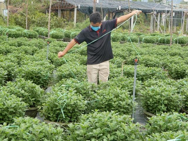 Người trồng hoa Tết âu lo - 1