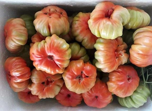 Nhìn xấu lạ, loại cà chua cổ ở Sơn La lại siêu đắt khách - 1
