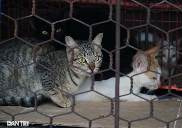 24 cá thể chó, mèo được cứu sống tại một lò giết mổ tiểu hổ - 8